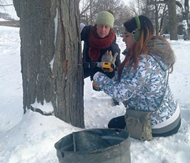 The sap is flowing and hopes are high for a large yield of maple syrup as Groundwork Somerville prepares for its annual Boil Down event on March 12.